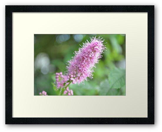 Pink flowers are always beautiful.. by Prettyinpinks