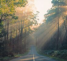 Morning Sunrays, Yarra Ranges, Victoria. by Ern Mainka