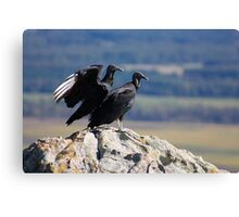 Vultures Canvas Print