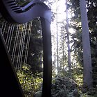 Harp in the Trees by Beth Stockdell