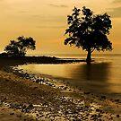 Golden Beach by Steven  Siow