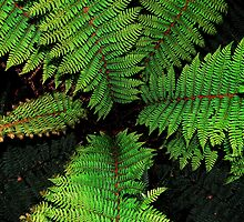 Cyathea by Garth Smith