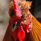 Chook by Frank Donnoli