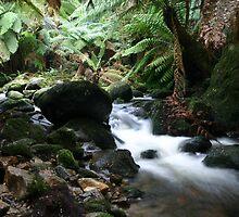 Tassie Creek by Erland Howden