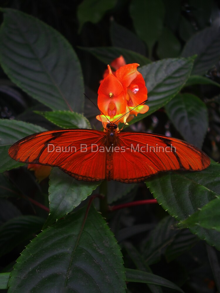 Like a Firefly by Dawn B Davies-McIninch