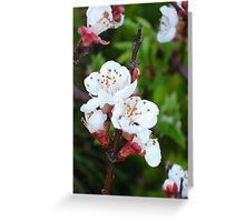 A Blur of Apricot Blossom Greeting Card