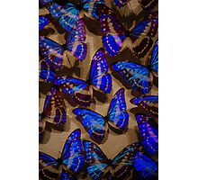 Glowing Butterflies Photographic Print