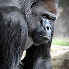 Gorilla by Kevin Means