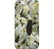Seedpod iPhone Case/Skin