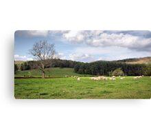 Rolling Pasture Canvas Print