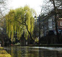 In search of spring in Utrecht by jchanders