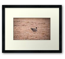 Prairie Chicken 3-2015 Framed Print