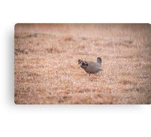 Prairie Chicken 3-2015 Metal Print