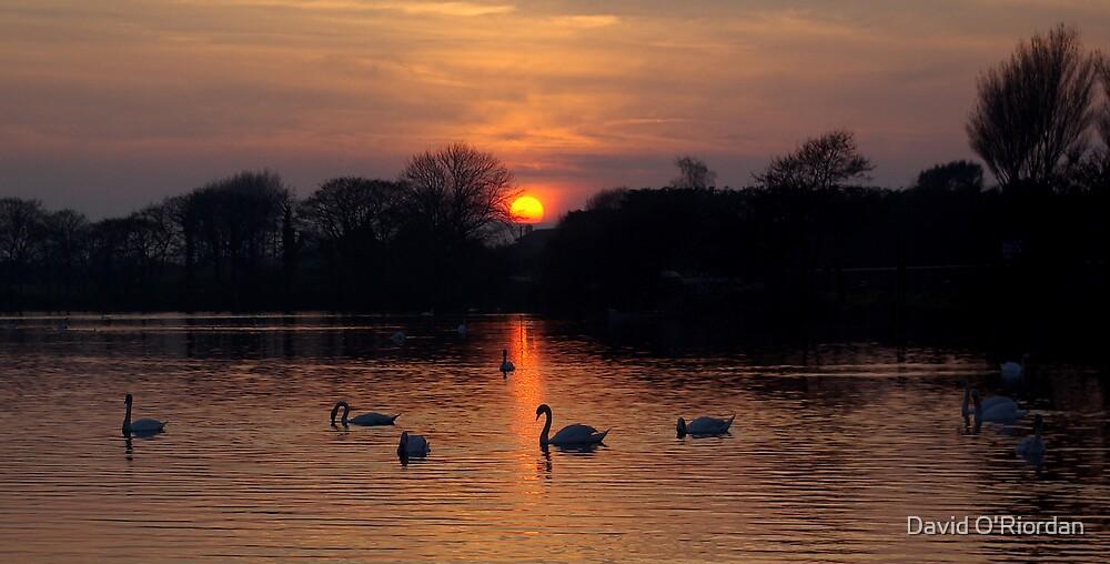 Sunset Lake by David O'Riordan
