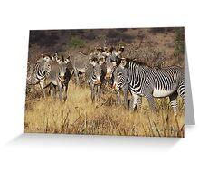 GREVY'S ZEBRAS - KENYA Greeting Card