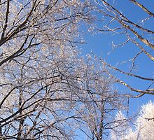 Frosty Trees by Charmik