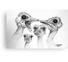 Ostrich Gossip Canvas Print