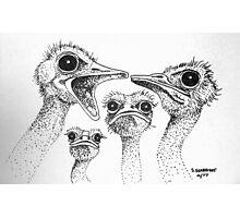 Ostrich Gossip Photographic Print