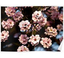 almond tree Poster