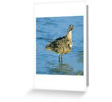 Beautiful Feathers Greeting Card