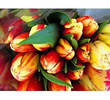 La Conner Tulip Festival Early Morning Hours Photographic Print