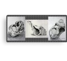 Shell Story Canvas Print