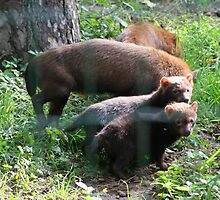 Bush dogs with pups by anibubble