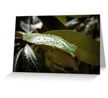 Rainy Magnolia Greeting Card