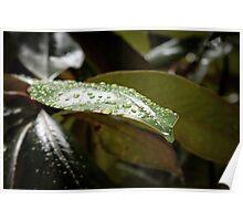 Rainy Magnolia Poster