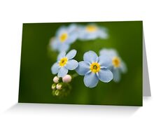 don't forget me Greeting Card