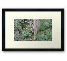 Tingle Forest, Valley of the Giants, Walpole, WA Framed Print