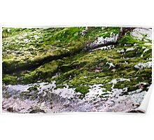mossy outcrop Poster