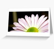 Macro of Pink Daisy Greeting Card