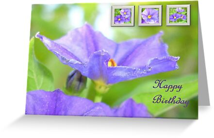 Happy Birthday Greeting Card with Solanum Flowers  by taiche