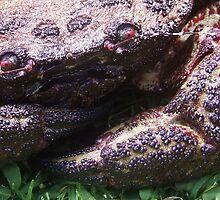 velvet crab by jeroenvanveen