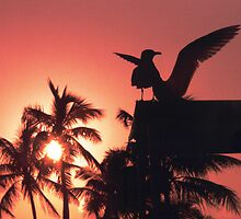 Birds at Sunset by James2001
