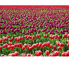 Flower Fields Photographic Print
