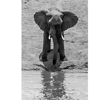 Elephant Reflection Photographic Print