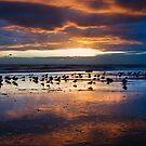 Ventura Beach by Nolan Nitschke