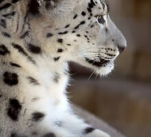 Leopard Profile by PsiberTek