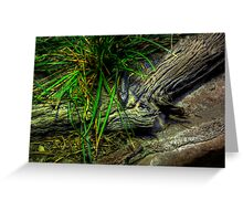 Yellow Belly Greeting Card