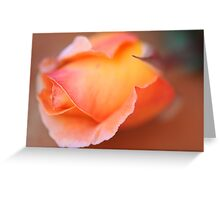 last session rose Greeting Card