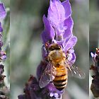 Busy Bees by chasingsooz
