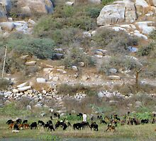 The shepherd and his flock at the foothills by nisheedhi