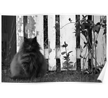 Fat Cat by Fence Poster
