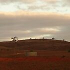 Sheep Station, Western Australia by mystery