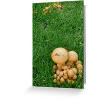 Bucolic Underfoot Greeting Card