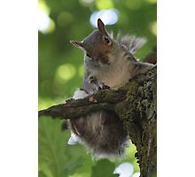 curiosity killed a cat (a squirrel?) Photographic Print