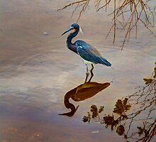 Blue Heron in the Marsh by njordphoto