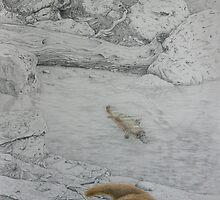 Platypus Retreat by Jodi Stewart